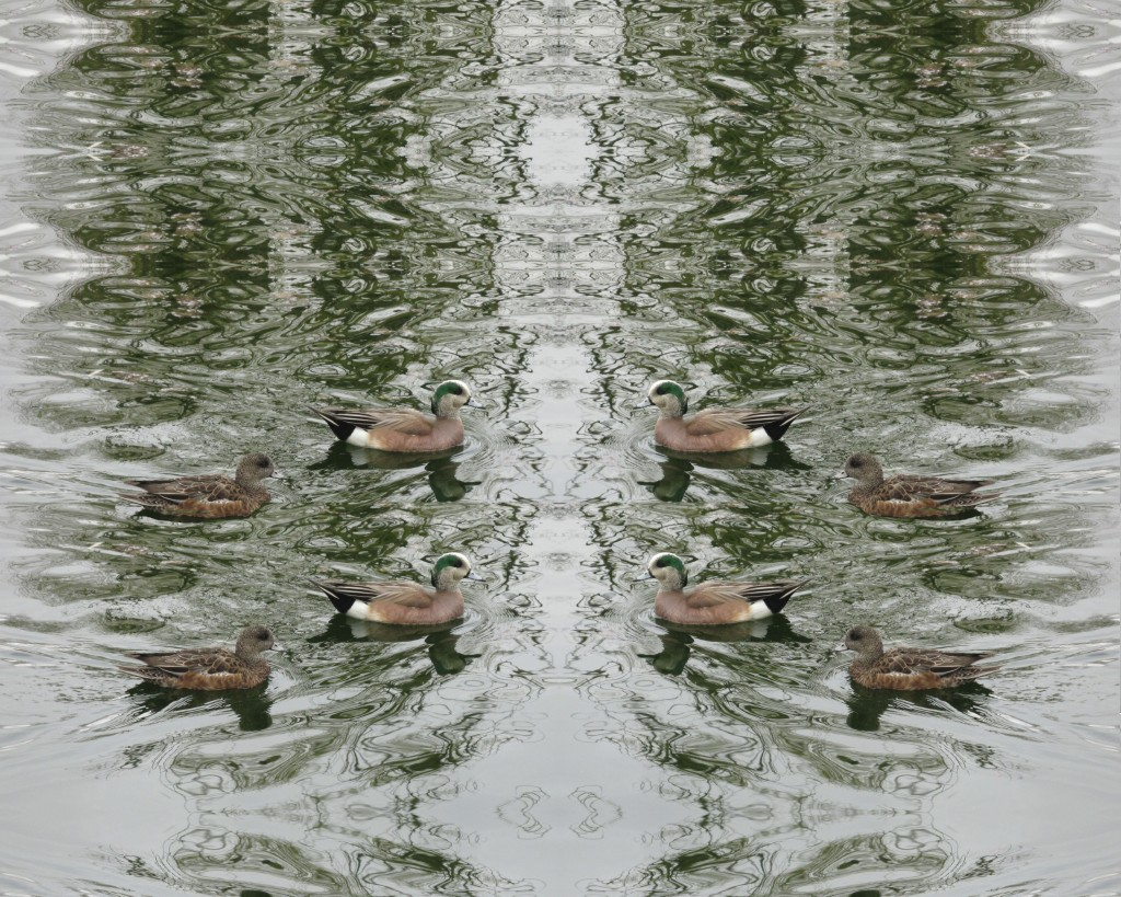 Ducks Upon Marbled Waters